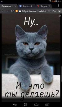 Котята,