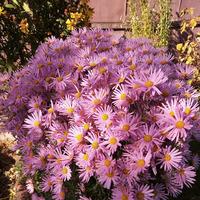Цветы в октябре.