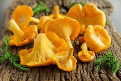 Какие грибы лучше брать для сушки?