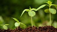 Стимуляторы, регуляторы роста, что нужно знать