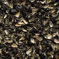 Для чего пригодится шелуха от семечек?