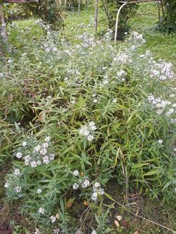 Нужен совет (помощь), Как называется растение?
