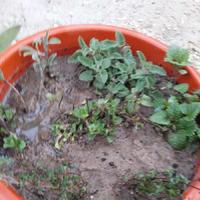 Ароматные травы для чая