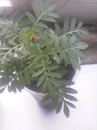 Комнатние цвети,