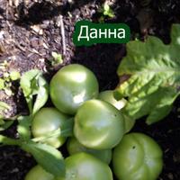 Пройдусь по сортам томатов (1)