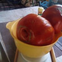 Мои новички на помидорной грядке. Обзор