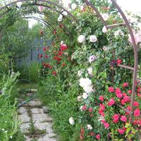 Опорные конструкции для вьющихся растений