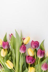 Выгонка тюльпанов: работа над ошибками