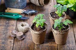 Во что посадить рассаду