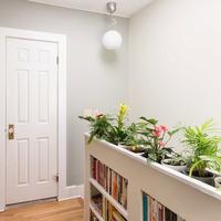 Комнатные растения, которые не боятся тени