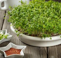 Микрозелень: как вырастить и использовать