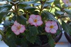 Начало июля, немного про цветочки. Все подряд