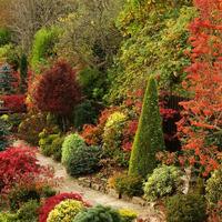 Какие кустарники украсят сад осенью?