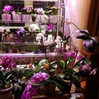 Какие лампы наиболее предпочтительны для растений?