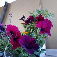 Немного новых фоток с огорода