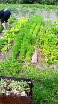 Мой зеленый огород. 20.06.21 г.