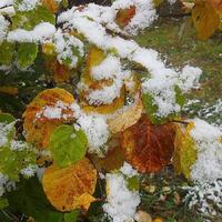Не опадает листва с деревьев: чем это чревато?