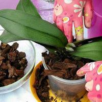 Кора для выращивания орхидей: что нужно знать?