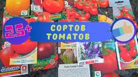 Необычные сорта помидор. Начинающий садовод в Америке.
