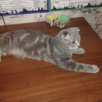 Кот на даче без прививок