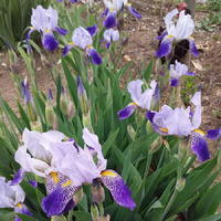 Весна в цветении