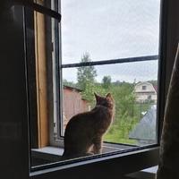 А может с котом всё нормально?