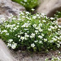 Лучшие растения для альпинариев