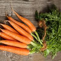 Почему морковка выросла горькой?