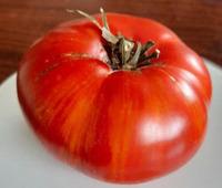 Проект Гном Томатный (Dwarf Tomato Project)