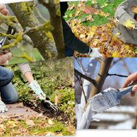 Особенности осеннего ухода за плодовыми деревьями