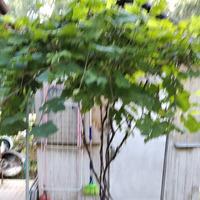 Прошу совета-чем укрыть мне виноград и надо ли.